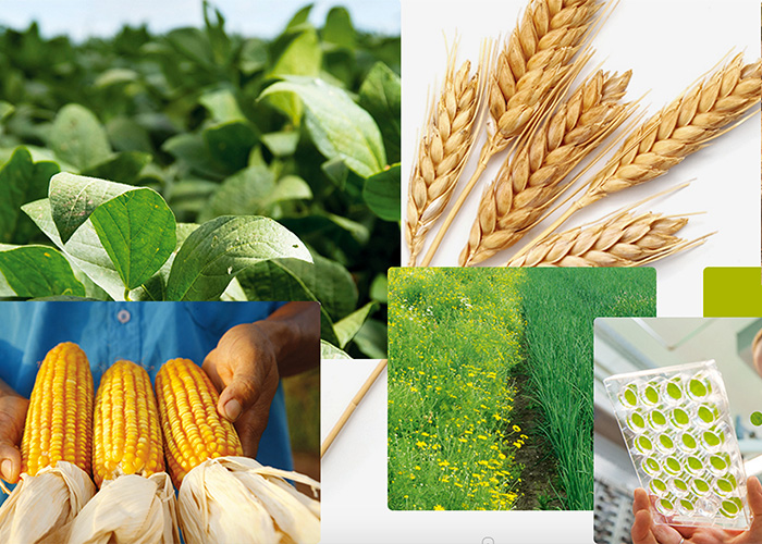 Syngenta Annual Report 2015